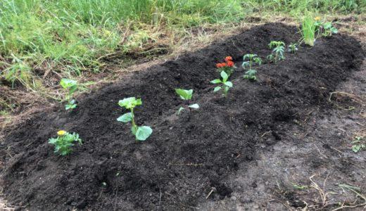 家庭菜園は田舎暮らしの夢の一つ!でも現実はそんなに甘くない!?家庭菜園の理想と現実を体験した!