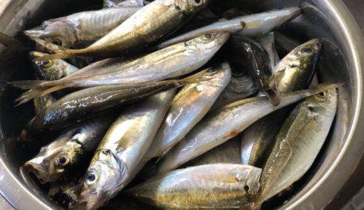 小さいアジが安かった!海でいっぱい釣れた!アジゴ(小アジ)の下処理は超簡単!挑戦して美味しく食べよう!